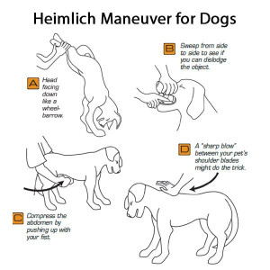 Heimlich Maneuver for Dogs