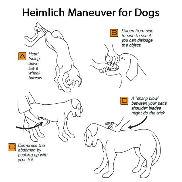 Heimlich Maneuver For Dogs And Cats