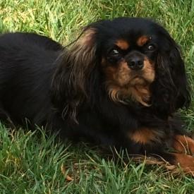 Amaia (adopted)