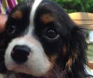 Oreo (adopted)