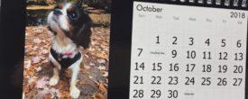 2018 Cavalier Puppies Calendar