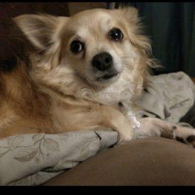 Patsy (adopted)