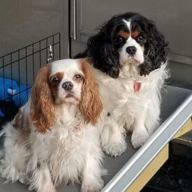 Smokey & Daisy (Adopted)
