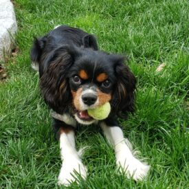Ziggy (Adopted)